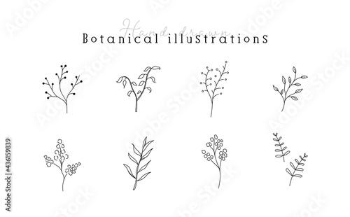 Fotografia 植物の線画イラストのセット シンプル ボタニカル ナチュラル 葉 自然 おしゃれ