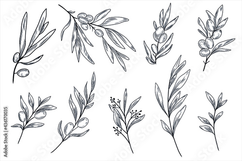 Tablou Canvas Sea buckthorn branches and leaves and olive tree branches and leaves in the hand