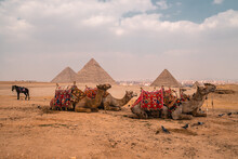 Panoramic View Of Camels, Horses, And Pigeons At The Pyramids In Giza, The Last Remaining Wonder Of The Ancient World