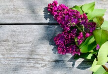 Branch Of Purple Blooming Lilacs On Wooden Background. Place For Your Text. Copy Space.
