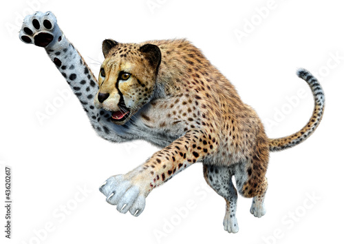 Foto 3D Rendering Big Cat Cheetah on White