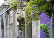 Stone Columns In Front Of A Building And Wisteria Plant