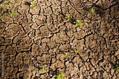 Fotografija gray ground, dry, very little grass, World Day to Combat Desertification and Dro