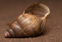 Closeup Of An Empty Snail Shell