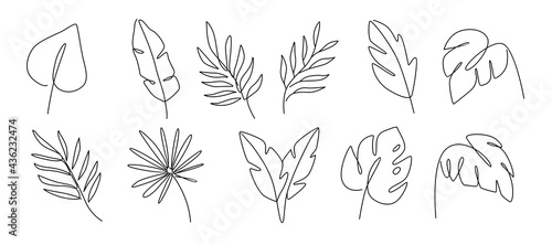 Photographie Line drawing vector leafs palm tree. Modern outline art style.