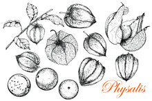 Physalis. Monochrome Sketch Of Fruits And Leaves. Vector Illustration Of A Stock Of Golden Berries. Vintage Engraved Superfood Style. Hand Drawn. For Badge For Label, Poster, Packaging Design Of Vegan
