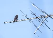 Merlin On The TV Antenna