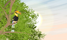 Bird Great Hornbill Buceros Sit On A Tree Branch In The Crown. Tropical Bird Great Indian Hornbill At Sunset. Realistic Vector Landscape