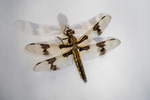 A Brown And Yellow Dragonfly And Its Faded Shadow Resting On A White Surface