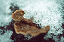 Closeup Shot Of Ice On Bracket Fungus - Perfect For Background