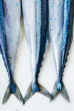 Blue Fish Tails