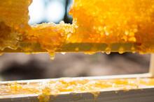 Drip On Honey Comb