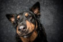 Fotografia De Perro En Estudio