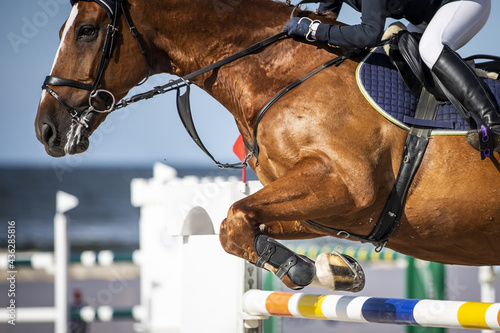 Stampa su Tela Horse Jumping, Equestrian Sports, Show Jumping themed photo.