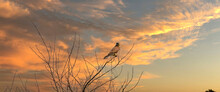 Web Banner Of A Kestrel Bird Of Prey Land With Wings Spread In The Top Of A Tree. Against A Dramatically Colored Sky. Long Cover Or Social Media