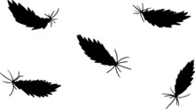 Feather Silhouette Illustration
