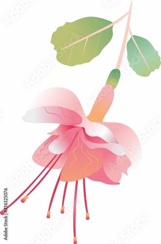 Fotografia Fuchsia pink flower