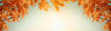 Autumn Background Of Yellow Maple Leaves With Copy Space Banner