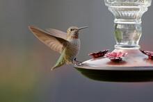 Closeup Shot Of A Cute Hummingbird Flying Near A Feeder