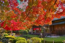 秋の日本庭園(山形)