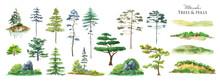 Watercolor Tree Set. Green Pine, Blue Spruce, Green Hills, Island Meadow