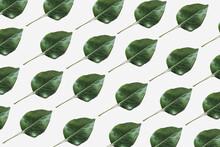 Green Cherry Leaf Pattern. Background.