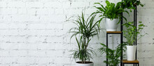 Mix Of Potted Indoor Plants On Stand By White Brick Wall. Air Purifying Houseplants. Banner Copy Space
