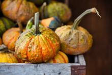 Warty Pumpkins In The Wooden Box. Farm Market