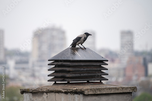 Canvas-taulu A gray adult crow with black wings standing on chimney system on flat rooftop of residential building, with cityscape in background on rainy day