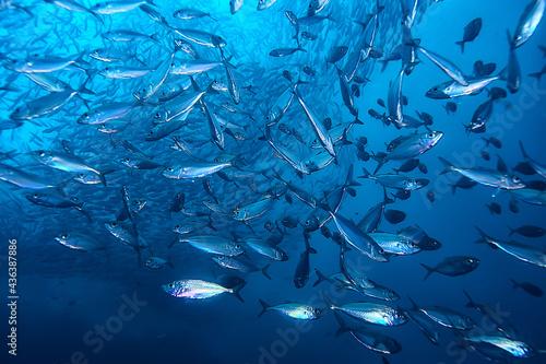 Valokuva lot of small fish in the sea under water / fish colony, fishing, ocean wildlife