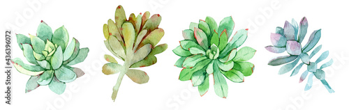 Photographie Succulents collection