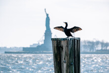 Double-crested Cormorant At The Pier In Front Of The Statue Of Liberty
