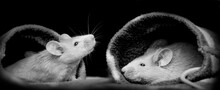 Cute Little Mice - Black Background