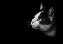 A Black And White Cat Face