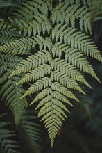 Close-up Detail Shot Of A Green Fern Leaf. Seen On A Hike At Berowra Creek Near The Hawkesbury River.