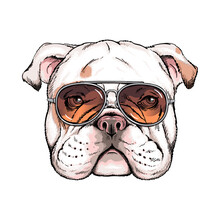 Cute English Bulldog Portrait. Dog In Sunglasses. Vector Illustration. Stylish Image For Printing On Any Surface