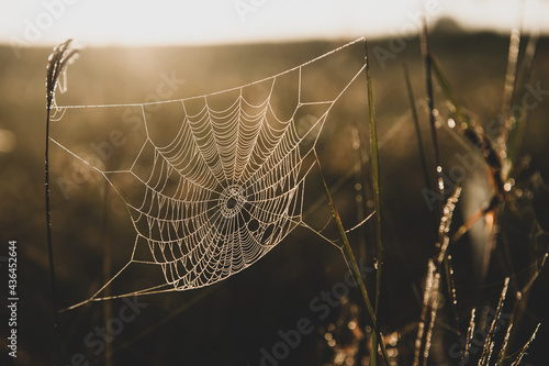 Cuadros en Lienzo Close-up spider web hanging on the grass at sunrise.