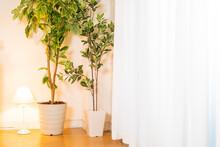 植える, 部屋, 鉢, くつろいで, 花, まど, 緑, テーブル, 白, 家, 花, デコレーション, 壁, 家具, 木, いす, 装飾物, 生計, デザイン, 屋内の, 庭, ゆか, 自然, 長いす