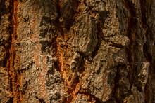 Bark Texture Pattern Background,Bark Of The Tree,Cracking Of Tree Bark