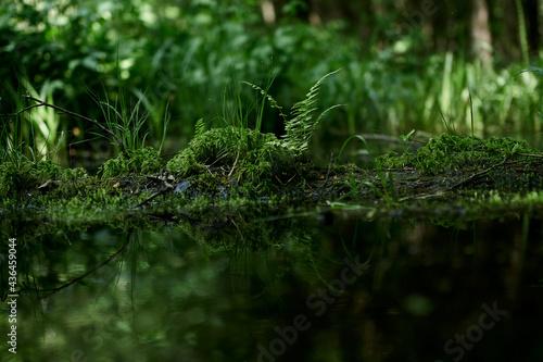 Photo fern, gren, nature, grass, leaf, forest, swamp