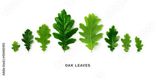 Green oak leaves creative banner. Fototapet
