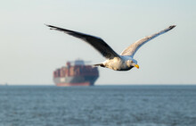 Seagull Flying Over The Sea With A Ship In A Background