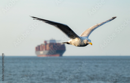 Photo Seagull flying over the sea with a ship in a background