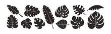 Palm Leaf Vector Set, Summer Foliage, Exotic Jungle, Black Silhouettes Isolated On White Background. Tropic Illustration