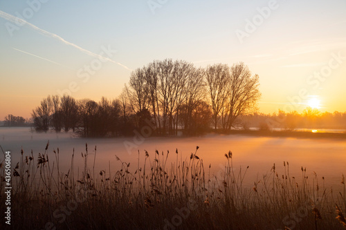 Photo Polder in Dutch Biesbosch National Park covered by fog during sunrise