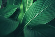 green leaf nature texture background, abstract pattern of tropical foliage plant in spring garden, fresh tree jungle forest in summer, wallpaper design of environment, ecological conservation concept