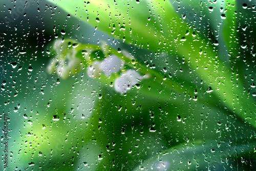 Deszczowe konwalie