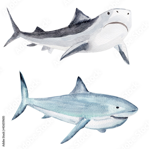 Shark watercolor elements set Fototapet