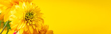 Yellow Chrysanthemums And Gerberas On Bright Background. Summer Concept. Greeting Postcard. Place For Text, Banner Format.