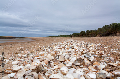 Fotografering beach and sea in the morning, empty shell, clam, conch